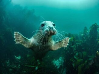 """Welcome to the Party"" (grijze zeehond), Farne Islands, Northumberland, Engeland. Door Adam Hanlon"